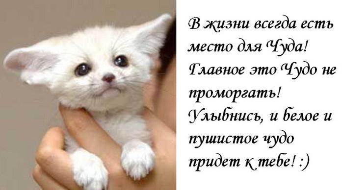 http://img0.liveinternet.ru/images/attach/b/0/10230/10230268_9960823_9953166_Belo_CHudo2.jpg