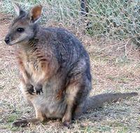 Животный мир животный мир австралии