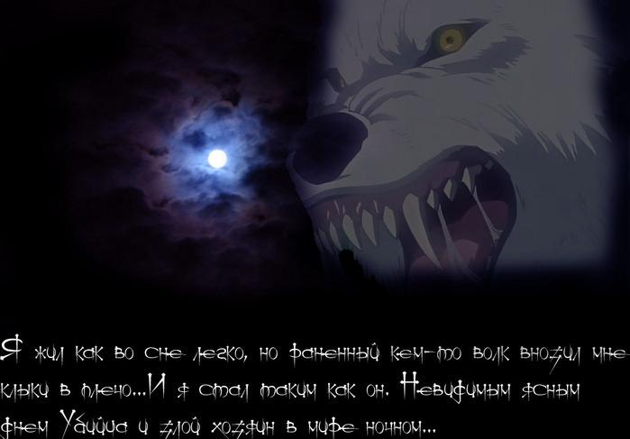 Фото волка на аватарку