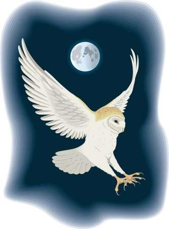 Хищные дневные и ночные хищные птицы