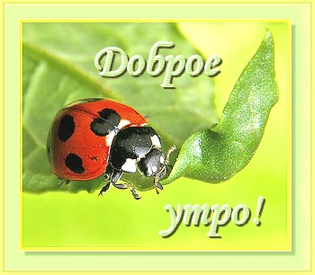 15899305_Bezuymyannuyy_11 (350x306, 33Kb)