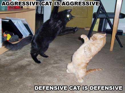 cats_gag_035 (438x327, 25Kb)