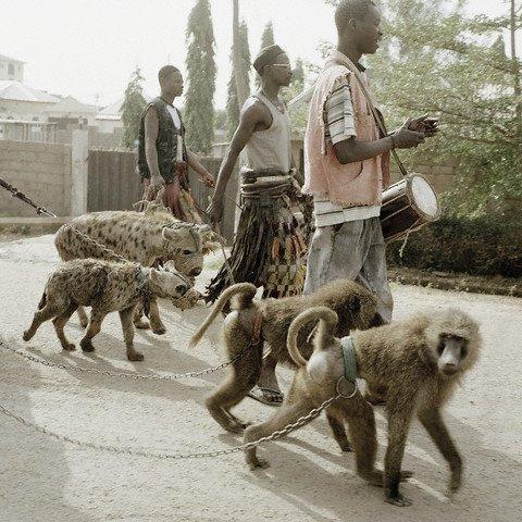 შინაური ცხოველები აფრიკაში