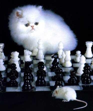 Белый кот маршака