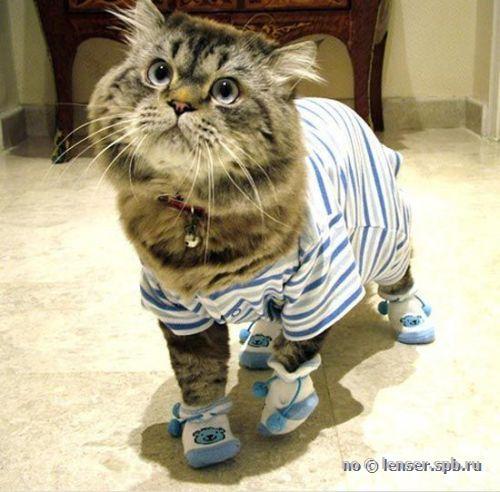 Прикольного котика сшить не хотите