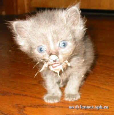 Коты американских форумов - самая полная подборка (241
