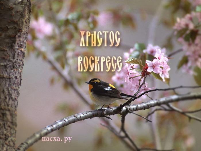 http://img0.liveinternet.ru/images/attach/b/1/12806/12806684_11.jpg