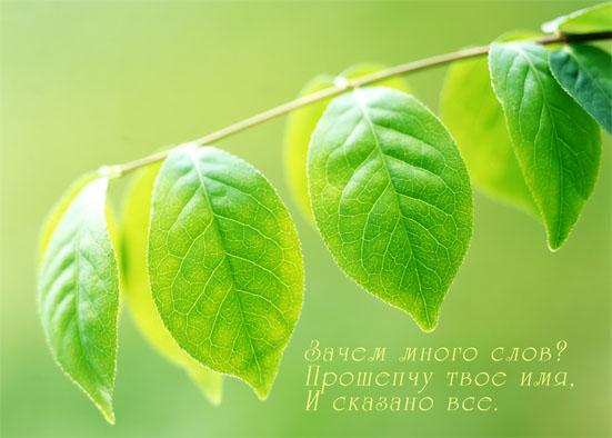http://img0.liveinternet.ru/images/attach/b/1/13246/13246593_listiki.jpg