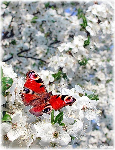 http://img0.liveinternet.ru/images/attach/b/1/13542/13542965_007.jpg