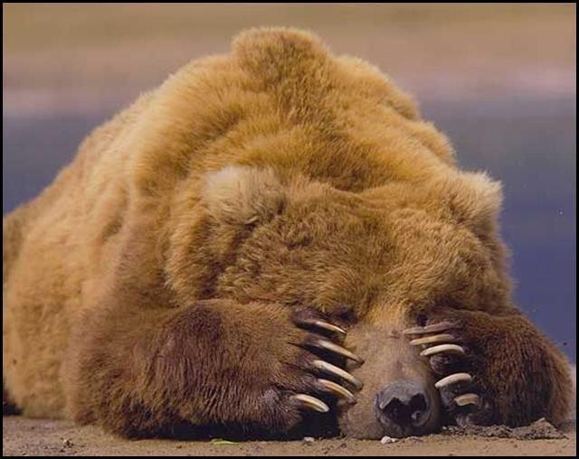 http://img0.liveinternet.ru/images/attach/b/1/17378/17378552_12_animals_52267.jpg