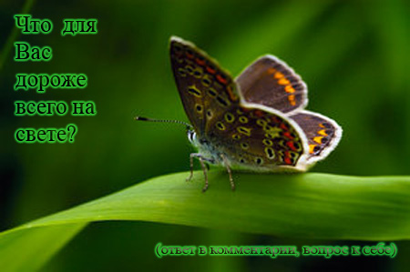 Бабочка (450x299, 63Kb)