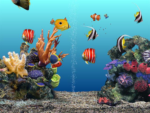 бесплатные обои для рабочего стола аквариум: