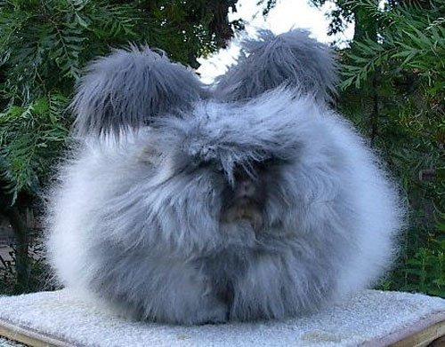 http://img0.liveinternet.ru/images/attach/b/1/3352/3352673_05_rabbits_56359.jpg