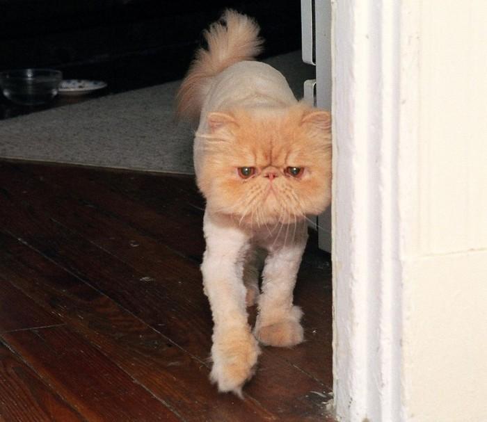 фото кошки мери