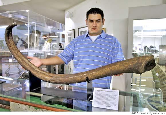 Longest human penis size