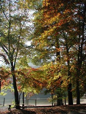 Доброе утро, Осень!