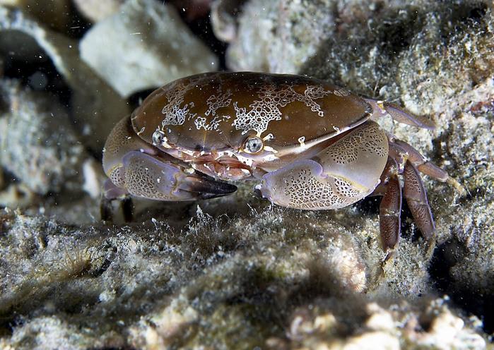 http://img0.liveinternet.ru/images/attach/b/2/1/501/1501329_crab.jpg