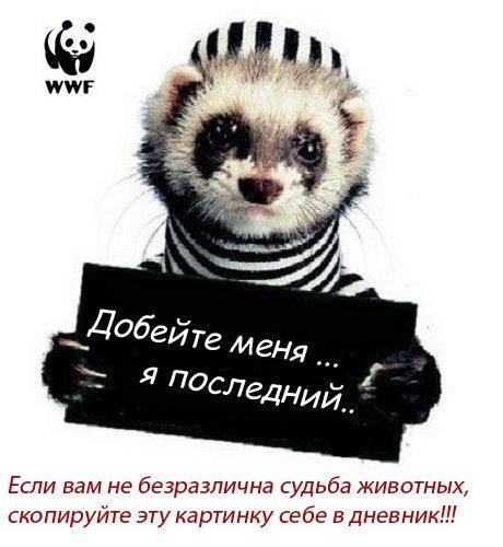 4762133_18036876_18033427_17725010_17545664_sudba_zhivotnuyh (460x500, 36Kb)