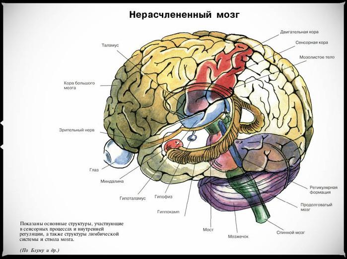 и пояснение: гиппокамп это самая старая (образовалась у животных раньше всего) часть коры больших полушарий.