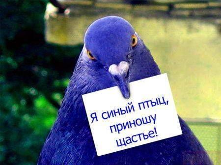 http://img0.liveinternet.ru/images/attach/b/2/1/796/1796190_sinyaya_ptica.jpg