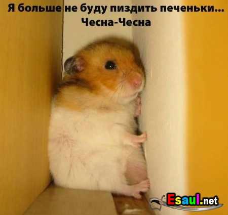 1190807305_1162031683_1161533975_no_more (450x425, 13Kb)