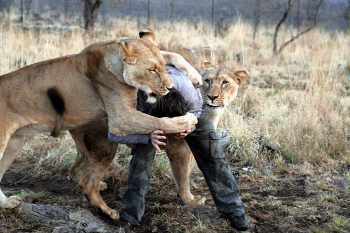 http://img0.liveinternet.ru/images/attach/b/2/21/431/21431245_1183014628_lions_vs_human_2.jpg