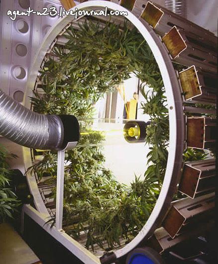 выращивание марихуаны - Самое интересное в блогах: http://www.liveinternet.ru/tags/%E2%FB%F0%E0%F9%E8%E2%E0%ED%E8%E5+%EC%E0%F0%E8%F5%F3%E0%ED%FB/