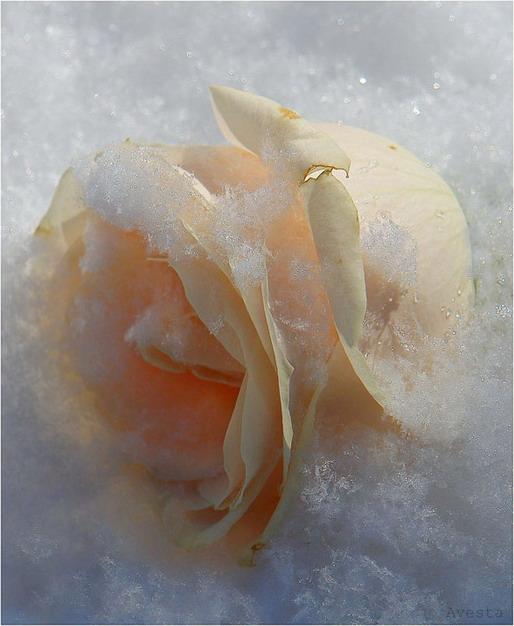 цветы зима фото: