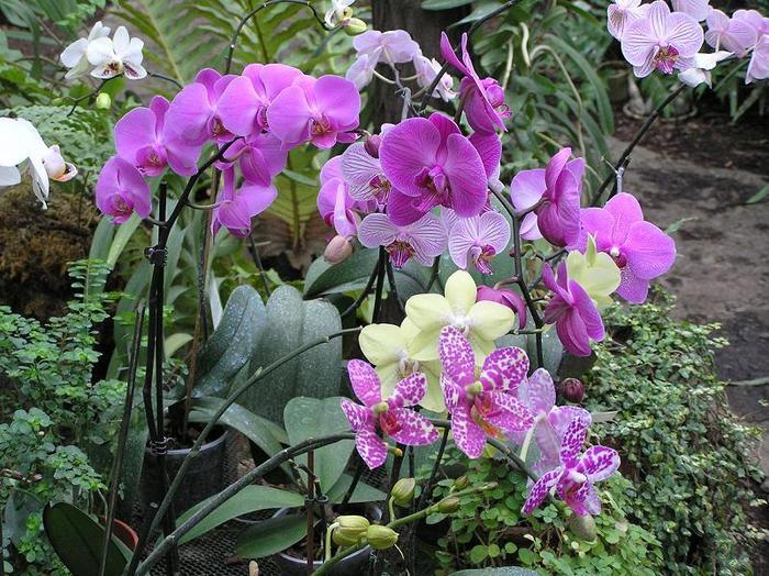 Картинки по запросу орхидеи в саду