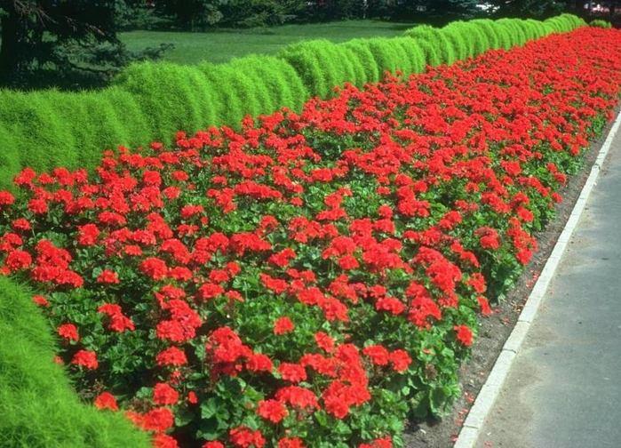 Ботанический сад проводит