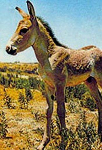 Животных красной книги казахстана