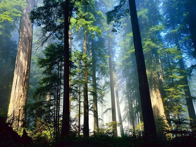 http://img0.liveinternet.ru/images/attach/b/2/24/329/24329945_forest_seqvoya_usa1_Melkiy.jpg