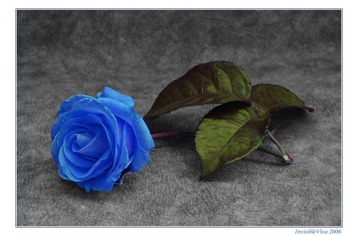 http://img0.liveinternet.ru/images/attach/b/2/24/637/24637989_205.jpg