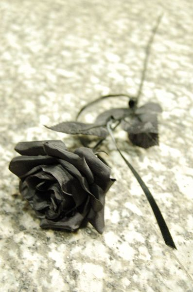 397px-Black_Rose[1] (397x599, 37Kb)
