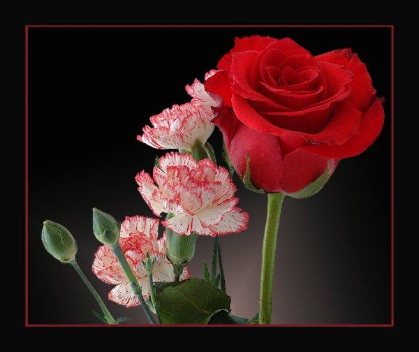 http://img0.liveinternet.ru/images/attach/b/2/24/851/24851261_1186048413_7713425486cb2d2025fa0d.jpg
