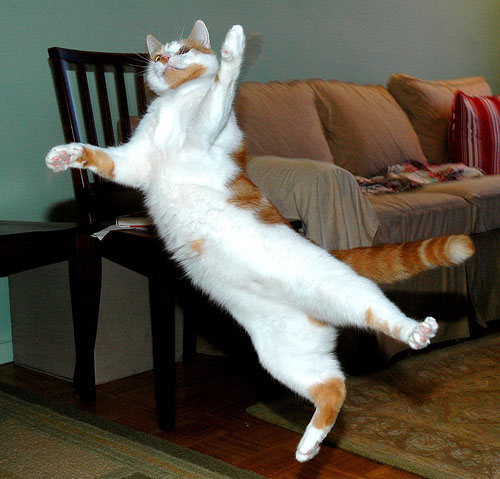 Летающие кошки_1