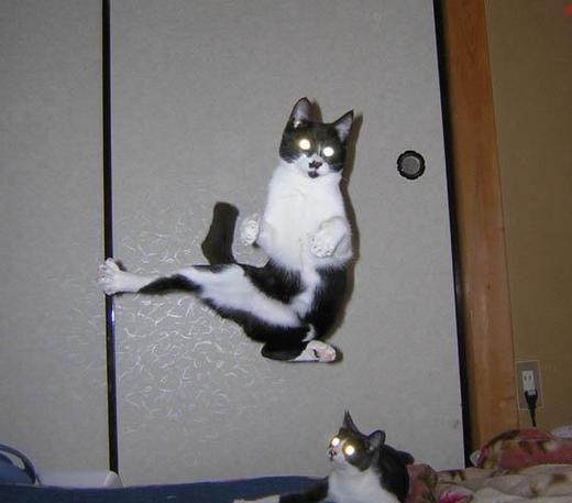 Иногда коты сходят с ума.