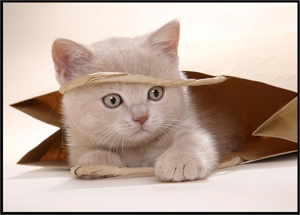 http://img0.liveinternet.ru/images/attach/b/2/25/455/25455193_cat_by_naderbellal.jpg