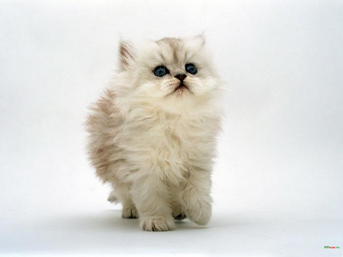 Котята (38 фото) - Скарамуш.ру - сайт хорошего настроения!