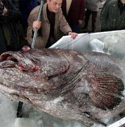 _190310_рыба китай 10 тонн (256x260, 56Kb)