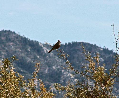 bird птица