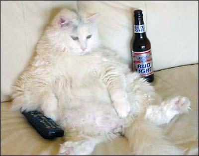 Бездельник кот