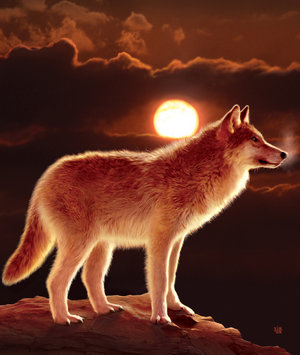 Sunset_Wolf_by_wallace (300x355, 25Kb)