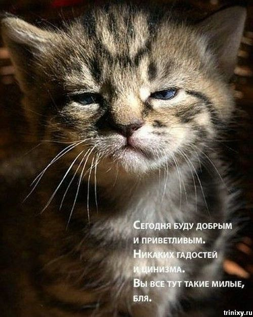 podborka_202_35 (500x625, 61Kb)
