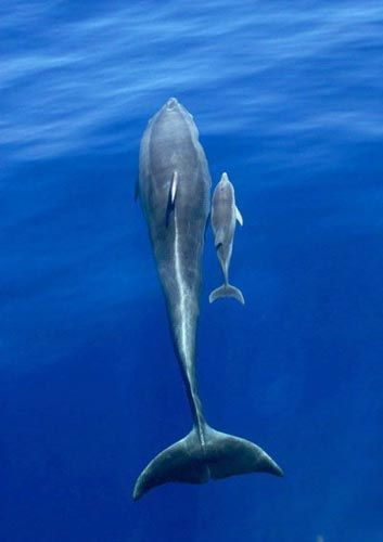 Очень красивые фото дельфинов (6 фото)