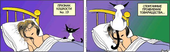 Кошки3 (580x180, 31Kb)