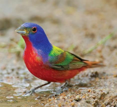 Тема: Re: Фото птиц.  Чем я не красавчик.  А?
