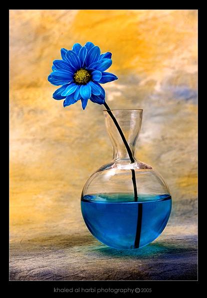 На нашем сайте Вы сможете скачать Рисунок схема цветка без регистрации.