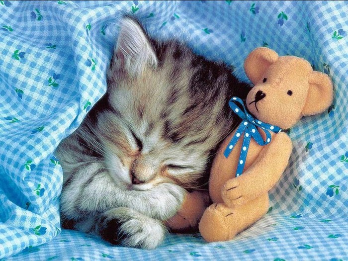 Animals_Cats__002018_7 (700x525, 149Kb)