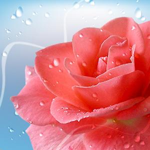 fresh_flowers (300x300, 37Kb)